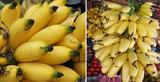 海南黄帝蕉